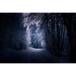 Into the Woods. Leica M7. Kodak Portra.